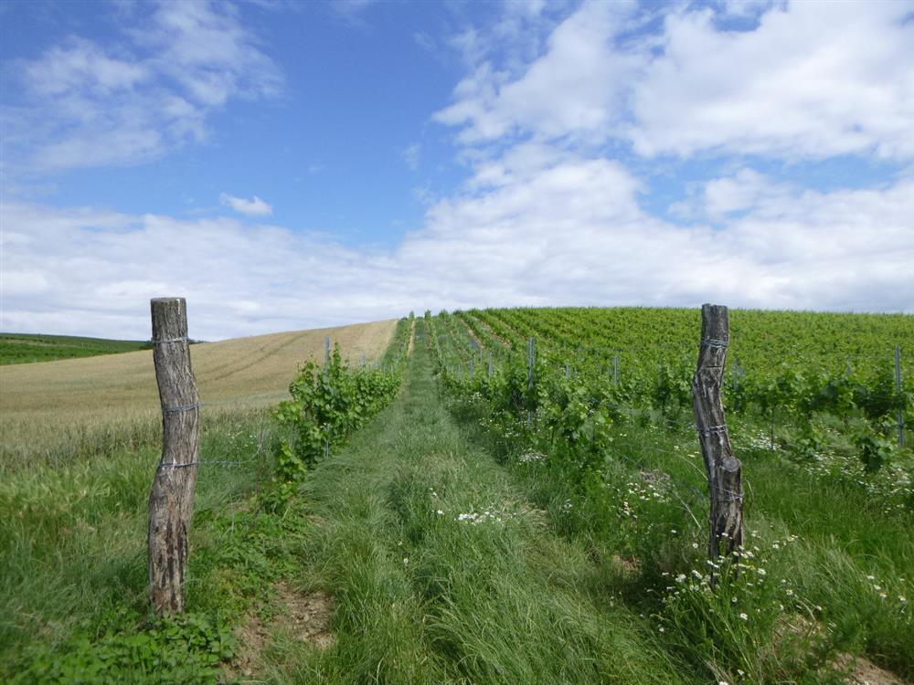 Dražba podílu id. 1/20 vinice v k.ú. Úvaly u Valtic, okr. Břeclav